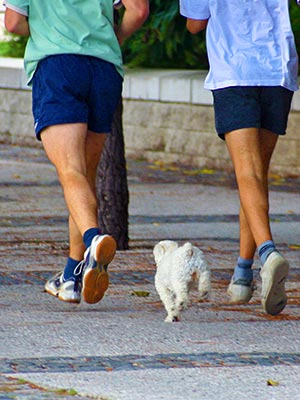 jogging with dog - biomechanics